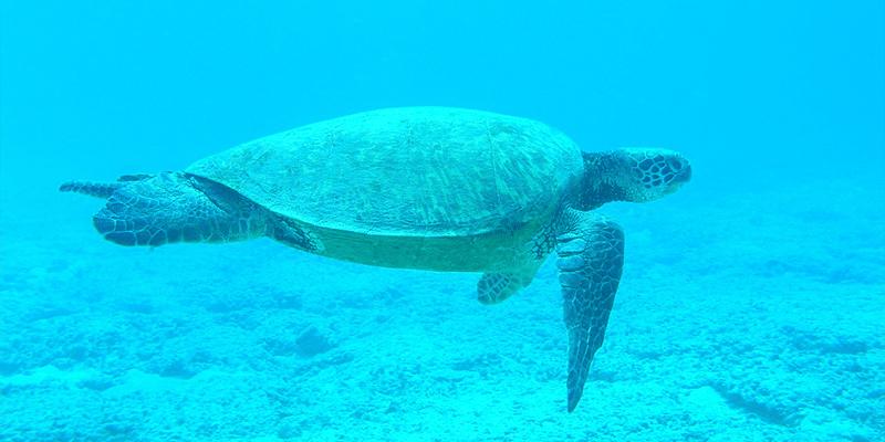 Schnorchelmaske Sicht unter Wasser